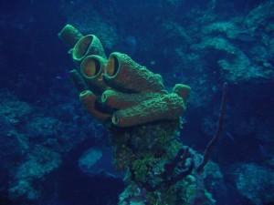 2 Sponge
