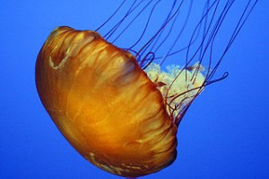 3 jelly_Monterey